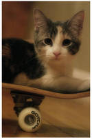 s-Cat-e by zvaella
