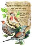 Save the birds by kiriOkami