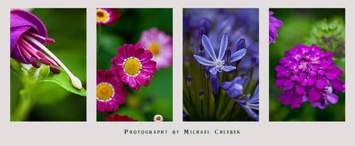 Beautiful Flowers by UnidentifyStudios
