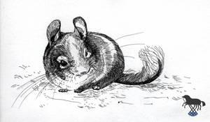 Some chinchilla sketch by OblokMagellana