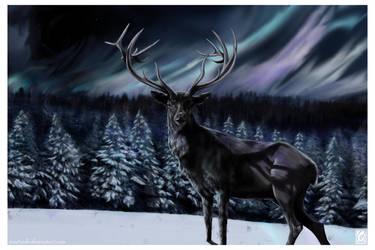 Northern Lights by JaniceDuke