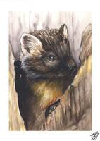 Pine Marten by JaniceDuke