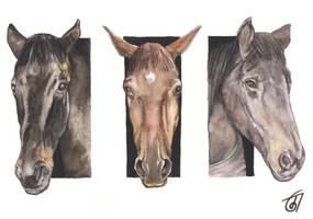 The Horses by JaniceDuke