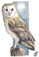 Barn Owl by JaniceDuke