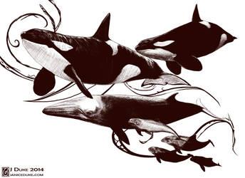 Hoy Whales by JaniceDuke