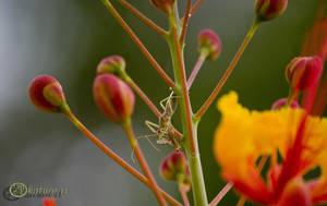 Assassin Bug vs. Wasp by katu01
