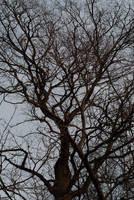 Tree by tonixart