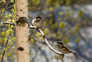 Sparrows by tonixart