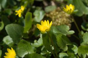 Flowers by tonixart