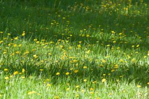 Dandelions Glade by tonixart