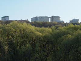 Trees by tonixart