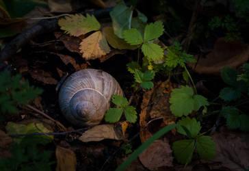 Snail by tonixart