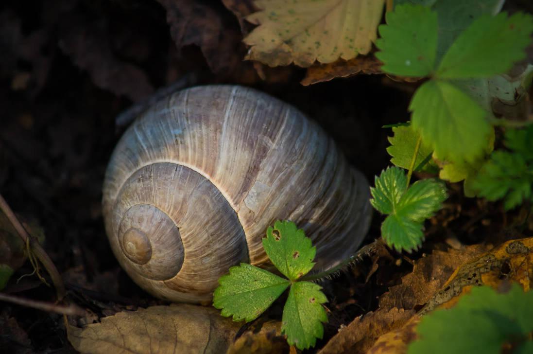 Big Snail by tonixart