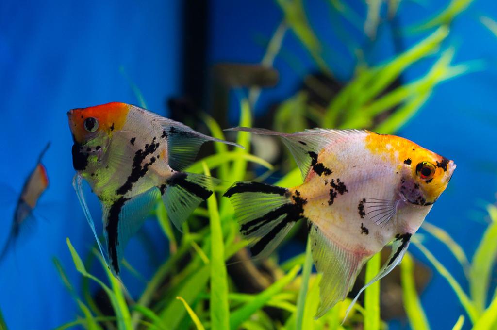 Fish by tonixart
