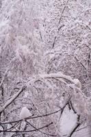 Snow by tonixart