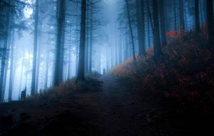 mystic forest II by jacekson