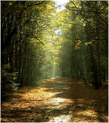 bright forest by Tanitha