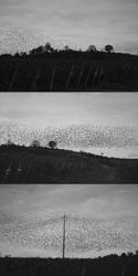 Birds by blessant