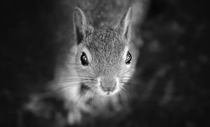 Squirrel portrait by ErkanKalenderli