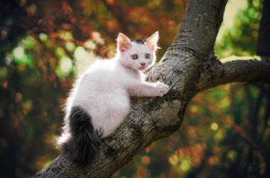 Kitty and Autumn... by ErkanKalenderli