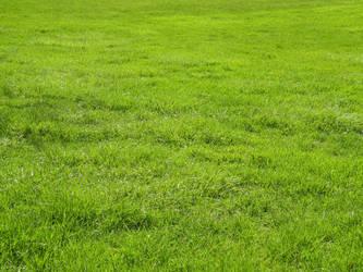 Grass Stock by Rai-Stock