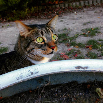 CAT 16 407 by SunnyUra