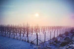 Dawn over Orchard by Cormocodran15