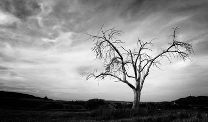 Der Tote Baum by Cormocodran15