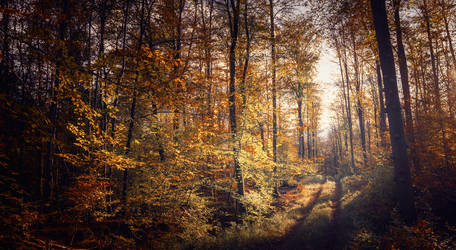 Rueckeweg by Cormocodran15