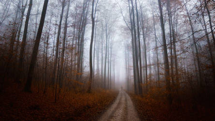 Nebelweg by Cormocodran15