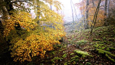 Nebelbuchen by Cormocodran15