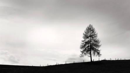 Winter Greeting by Cormocodran15