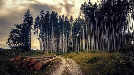 Woodlands by Cormocodran15