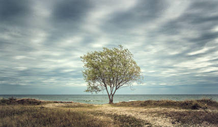The Lonely Sea by Cormocodran15