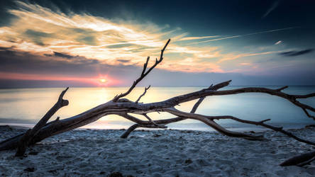 Strandgut by Cormocodran15