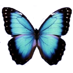 Mariposa PNG by CheqeaQueSoyVaaLuu