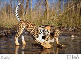 Ocelot Wild Doll Cat 03 by leo3dmodels