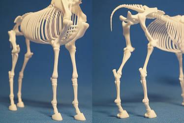 Horse skeleton 06 by leo3dmodels