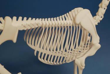 Horse skeleton 07 by leo3dmodels