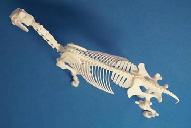 Horse skeleton 03 by leo3dmodels