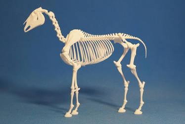 Horse skeleton 01 by leo3dmodels