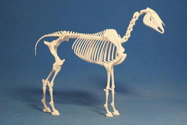 Horse skeleton 02 by leo3dmodels