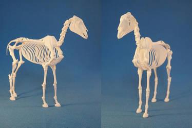 Horse skeleton 04 by leo3dmodels