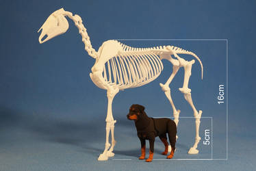 Horse skeleton 08 by leo3dmodels