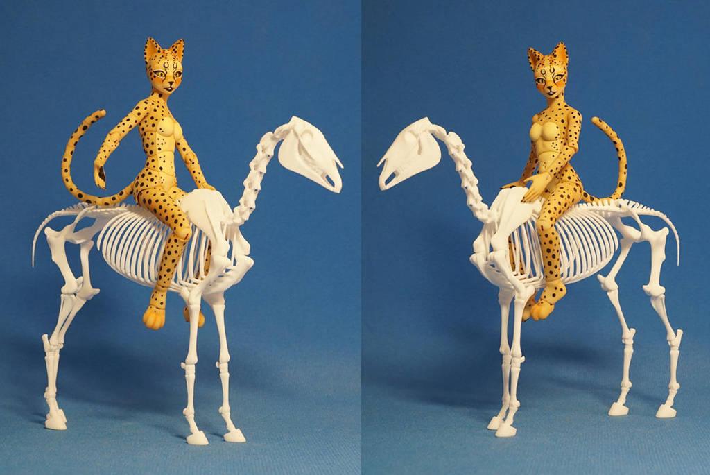 Horse skeleton 09 by leo3dmodels