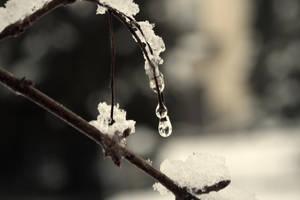Snow Drops by Mitsinka