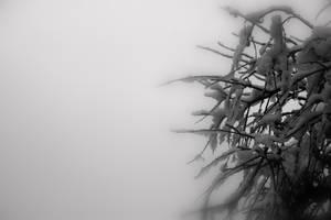 Snow Twig by Mitsinka