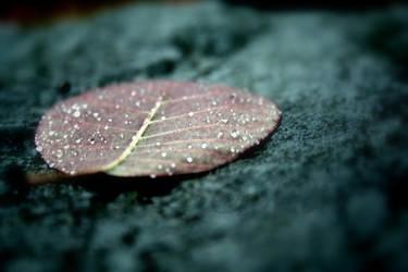 Leafing by Mitsinka