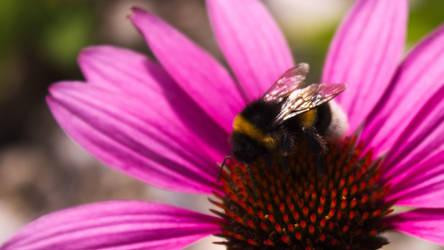Bumblebee at work by VSeliott