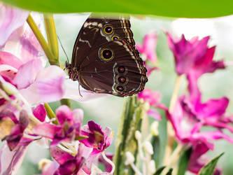 Butterfly on Purple Flower by VSeliott